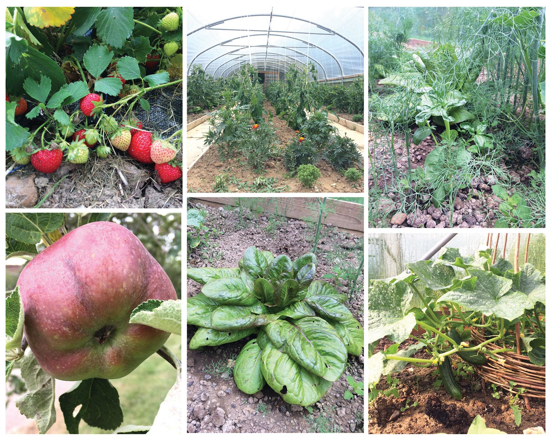 garden workshop mix